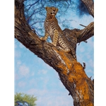 Approaching Masai - leopard in tree by John Banovich