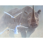 Black Thunder - charging Black Rhino by John Banovich