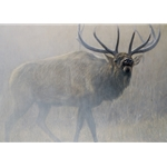 Echoes of Yellowstone - bugling bull elk by John Banovich