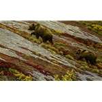 Alaskan Autumn - Grizzly Bears by  Robert Bateman