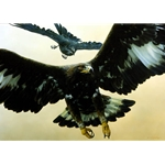 Without Warning - Golden Eagle and Raven by wildlife portrait artist Carl Brenders