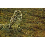 Burrowing Owl by Robert Bateman
