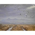 Across the Sky - Snow Geese by Robert Bateman