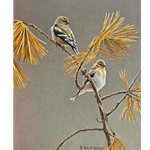 American Goldfinch - Winter Dress by Robert Bateman