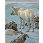 Arctic Evening - White Wolf by Robert Bateman