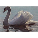 Backlight - Mute Swan by Robert Bateman