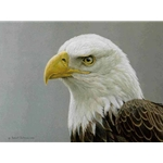 Bald Eagle Portrait by Robert Bateman