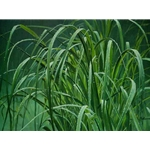 Beach Grass and Tree Frog by Robert Bateman