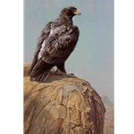 Black Eagle by Robert Bateman