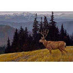 Black-tailed Deer in the Olympics by Robert Bateman