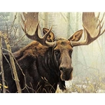 Bull Moose by Robert Bateman