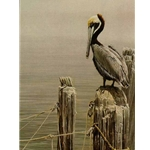 Brown Pelican and Pilings by Robert Bateman