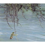 Broad-tailed Hummingbird Pair by Robert Bateman