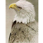 Bald Eagle by Robert Bateman