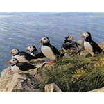 Bright Day - Atlantic Puffins by Robert Bateman