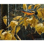 Cottonwood Gold - Baltimore Oriole by artist John Seerey-Lester