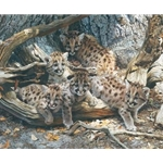 While the Cat's Away - Cougar cubs by wildlife artist Carl Brenders