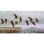 Over the Marsh Canada Geese by wildlife artist Maynard Reece