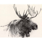 Bull Moose Stone Litho by Robert Bateman