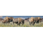 Grounds Keepers - Bison herd grazing by artist Rod Frederick