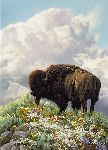 Ferdinand - Bison by Greg Beecham