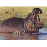 Confrontation - hippo by John Banovich