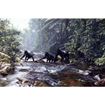 Fleeing Rwanda - mountain gorillas by John Banovich