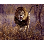 Inside the Red Zone - male lion charging by John Banovich