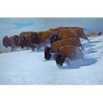 Into the Drift - bison in winter by John Banovich