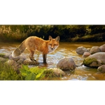The morning sun dancing off the creek and bathing the fox in a warm glow