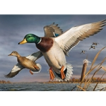 2018-2019 Federal Duck Stamp - PRINT ONLY - Mallards by Robert Hautman
