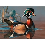 2019-2020 Federal Duck Stamp - PRINT ONLY - Wood Duck and Decoy by Scot Storm