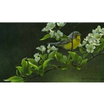 Canada Warbler and Pear Blossoms by Robert Bateman