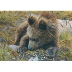 Bearly Awake - Grizzly bear cub by wildlife artist Carl Brenders