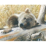 Time-Out - Grizzly Bear Cub by wildlife artist Carl Brenders