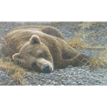 Grizzly at Rest by Robert Bateman