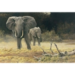 Elephant Cow and Calf by Robert Bateman