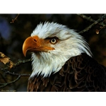 A Threatened Symbol - Bald Eagle Portrait by wildlife artist Carl Brenders