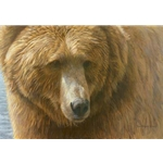 Grizzly Head Portrait by Robert Bateman