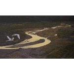 Above the River - Trumpeter Swans by Robert Bateman