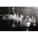 Canada Geese Family by Robert Bateman