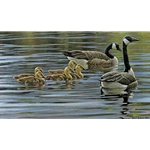 Canada Geese With Young by Robert Bateman