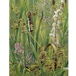 Cattails, Fireweed and Yellowthroat by Robert Bateman