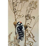 Downy Woodpecker on Goldenrod Gall by Robert Bateman