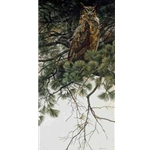 Great Horned Owl in White Pine by Robert Bateman