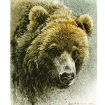 Grizzly Edition Predator Portfolio by Robert Bateman
