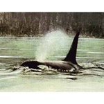 Fluid Power - Orca by Robert Bateman