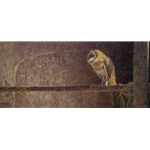 Catching the Light Barn Owl by Robert Bateman