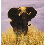 Tsavo Sentinel - Charging elephant by wildlife artist Simon Combes