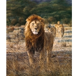 In His Prime - Lion and family by african wildlife artist Simon Combes